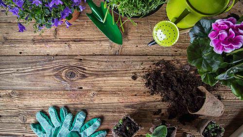 園芸療法のはじめ方|介護現場の園芸の効果と手順をご紹介