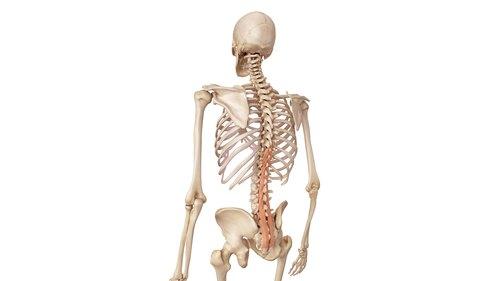 多裂筋とは|腰痛に効果的なトレ...